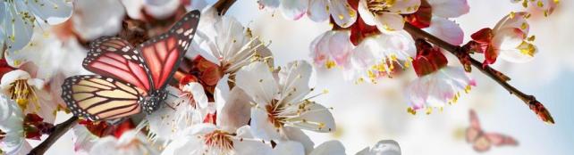 Цветы и растения_301
