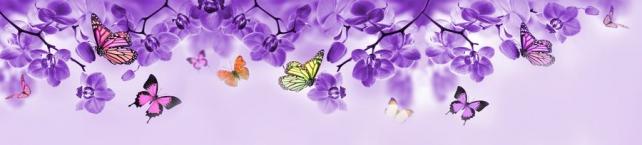 Цветы и растения_306