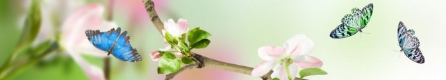Цветы и растения_307