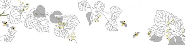 Цветы и растения_325