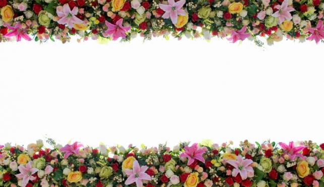 Цветы и растения_330