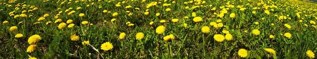 Цветы и растения_34