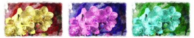 Цветы и растения_384