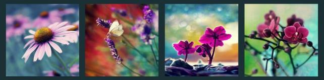 Цветы и растения_391