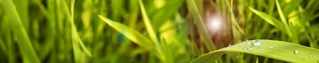 Цветы и растения_399