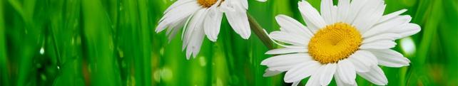 Цветы и растения_42
