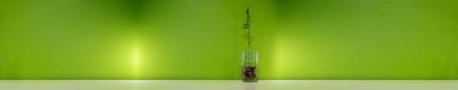 Цветы и растения_433