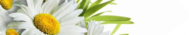 Цветы и растения_44