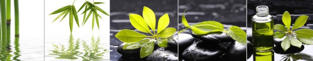 Цветы и растения_462