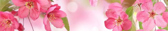 Цветы и растения_48