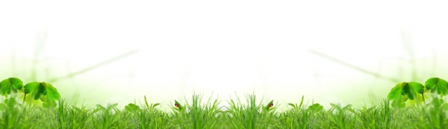 Цветы и растения_507