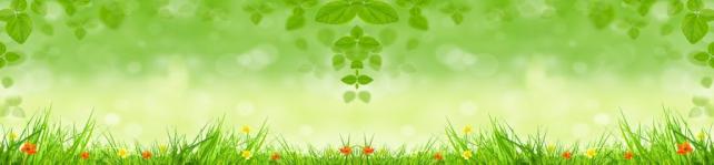Цветы и растения_508