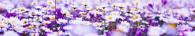 Цветы и растения_50