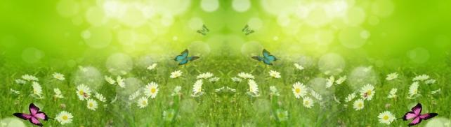 Цветы и растения_510