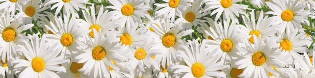 Цветы и растения_557