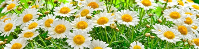Цветы и растения_558
