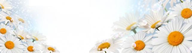 Цветы и растения_562