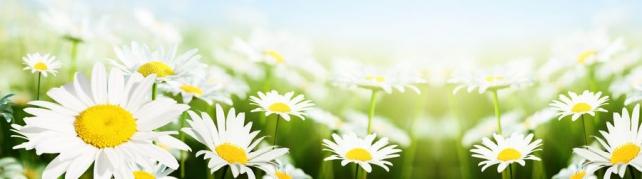 Цветы и растения_564