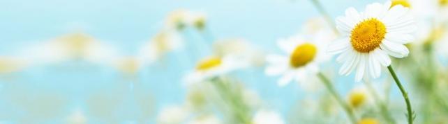 Цветы и растения_565