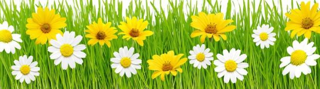 Цветы и растения_574