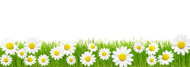 Цветы и растения_575