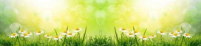 Цветы и растения_576