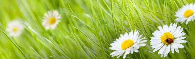 Цветы и растения_577