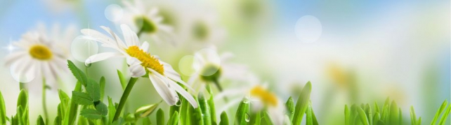 Цветы и растения_581