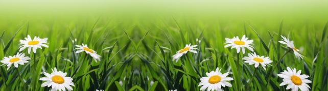 Цветы и растения_583