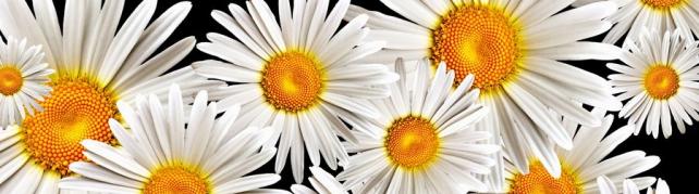 Цветы и растения_584