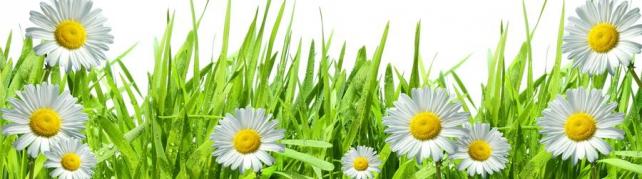 Цветы и растения_587