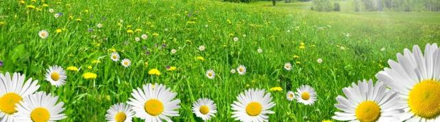 Цветы и растения_589