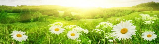 Цветы и растения_590