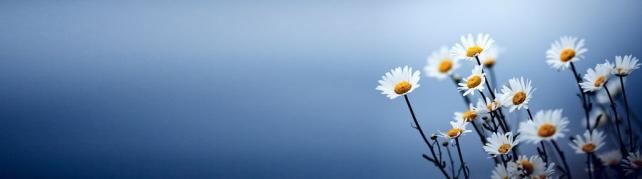 Цветы и растения_596