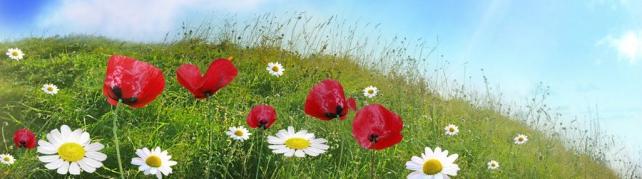 Цветы и растения_621