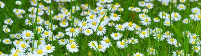 Цветы и растения_626
