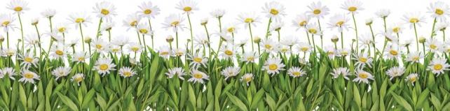 Цветы и растения_629
