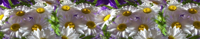 Цветы и растения_640