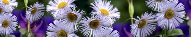 Цветы и растения_641