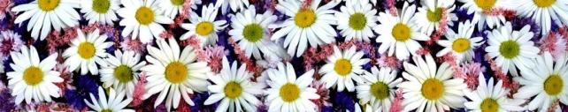 Цветы и растения_644