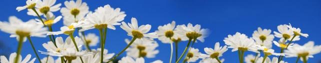 Цветы и растения_645