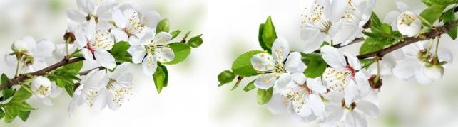 Цветы и растения_648