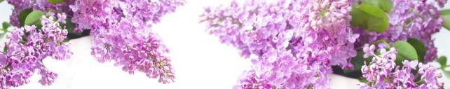 Цветы и растения_649