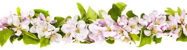 Цветы и растения_653