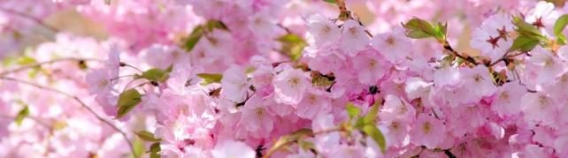 Цветы и растения_658