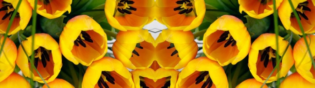 Цветы и растения_65