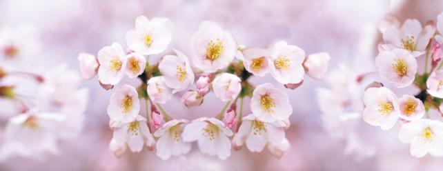 Цветы и растения_660