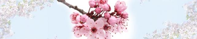 Цветы и растения_661