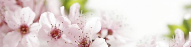 Цветы и растения_665