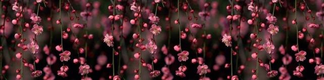 Цветы и растения_666